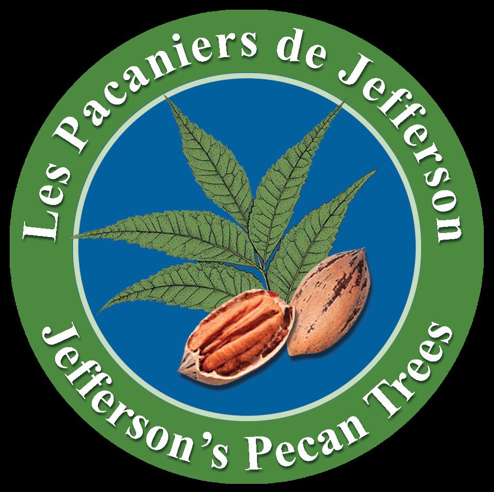 Pacanier Jefferson Pecan